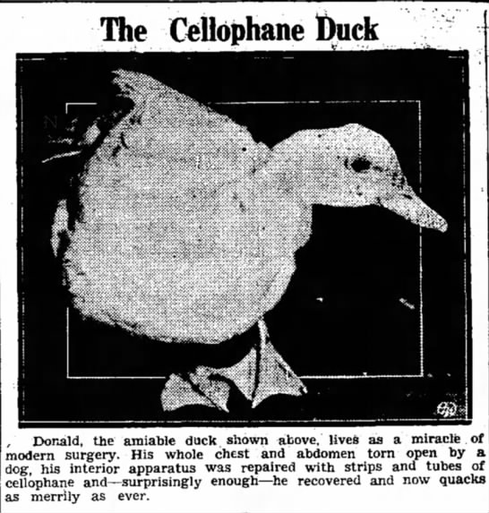 The Cellophane Duck